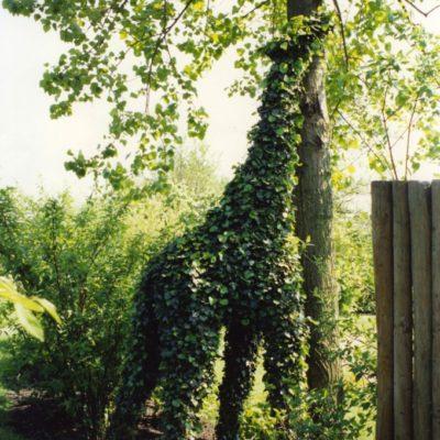 giraf klimop292